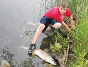 After seeing our earlier articles and photos on pike caught in Goodrich a reader submitted this one. Shawn Karczewski, 11, caught this 44-inch pike in Goodrich this summer from shore with a worm and 6 lb. test line and NO NET. It took more than 15 minutes to land and Shawn had to step on it to hold it until his dad could get it in hand. The pair thought they were just fishing for bluegill.