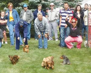 Above: The weiner dog race - a first-time event at the Woodhaven Senior Community 22nd annual Fall Fest on Saturday.