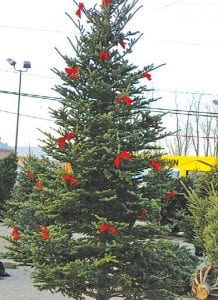 This decked out Frazier fir is a 13-footer but not as tall as the 15-footers for sale. Seven to eightfeet trees are the norm.