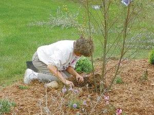 Margaret O'Sullivan, a Gleaner member from Monrose, plants Columbine in one of many flower beds at the park.