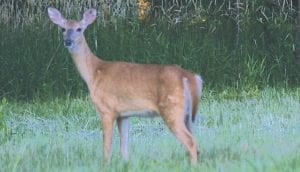 Because of an increase to the deer population in the state of Michigan, more deer management units have been opened to hunters.