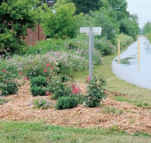 A patch of weeds was transformed into a bed or roses by the annual beautification project of the township's Parks and Recreation Advisory Committee.