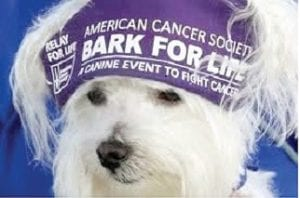 This Saturday the township park is the host site for an American Cancer Society Bark for Life event.
