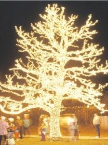A tree all aglow for the holidays at Crossroads Village.