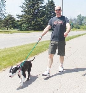 """Dave Echolz, of Grand Blanc, takes a stroll with June, a PAWS dog currently available for adoption. June spent most of her life chained to a tree before being rescued from a home in northern Michigan, Echolz said. She needs a little TLC, but she has """"the sweetest disposition,"""" he said."""