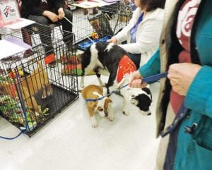 Bree, a rescued dog, was briefly reunited with her puppies last Saturday during a Santa Dog Day adoption event at Petco Superstore, hosted by the PAWS animal shelter.