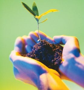 Plant grafting is an interesting way to propagate new plants.